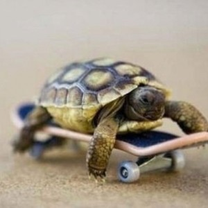 tiny-turtle-on-a-skateboard