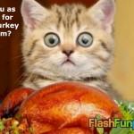 thanksgiving-turkey-ecard